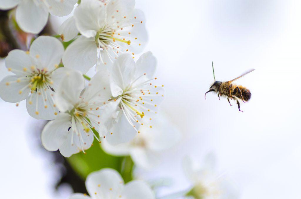 Bienenstich und Kinder