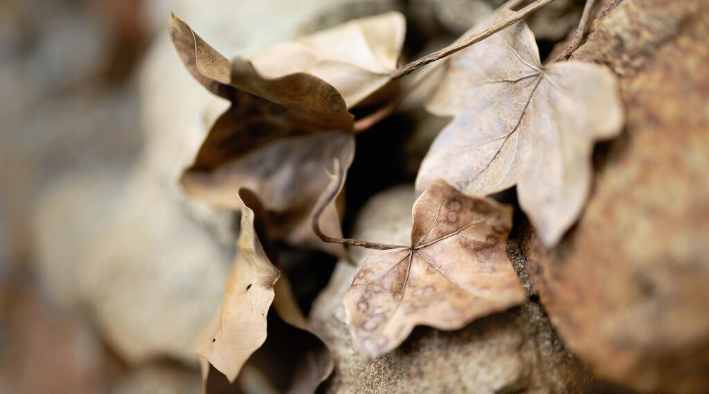 Die Lebenskraft in der Homöopathie